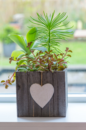 Succulent plants iin wooden box with a white heart in front of  a window