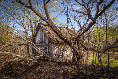Abandoned little house overgrown with blooming trees and bush in Belarus Chernobyl exclusion zone, recently opened for the public from april 2019.
