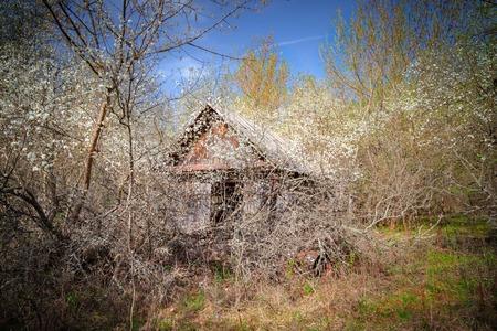 Casita abandonada cubierta de árboles en flor y un arbusto en la zona de exclusión de Chernobyl en Bielorrusia, recientemente abierta al público a partir de abril de 2019. Foto de archivo