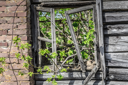 Tree growing through a collapsed window of a building  in Belarus Chernobyl exclusion zone, Stockfoto