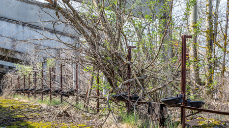 Remains of an abandoned farm stable overgrown with bushes and trees  in Chernobyl disaster area in Belarus Stockfoto