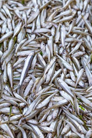 Top view mackerel fish in market in Italy