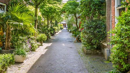 Cozy gree decorated street in Haarlem in the Netherlands Concept: city temperature or water management and control Stockfoto