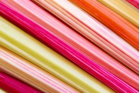 Background with closeup of colorful rainbow chard stems Stockfoto