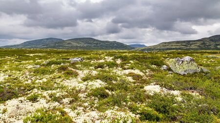 Landscape Rondane National Park in Oppland Norway
