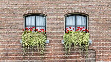 Background with classic farmer or caste windows with red geranaium and hanging plants Stockfoto