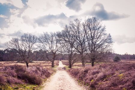 Landscape Wolfhezer heath nature momument area in Gelderland, Netherlands