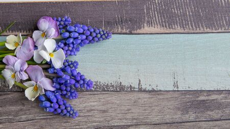 Wooden  with yellow and white pansies and grape hyacinth