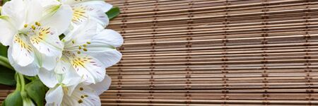 Web banner with White Alstroemeria flowers or Peruvian lily or Lily of the Incas on natural wicker background