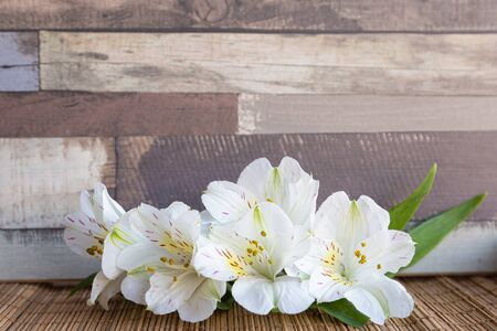 Background with White Alstroemeria flowers or Peruvian lily or Lily of the Incas with natural wooden background Фото со стока