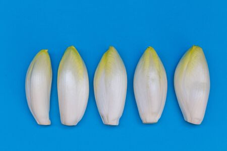 Fresh chicory on a clear blue background Banque d'images