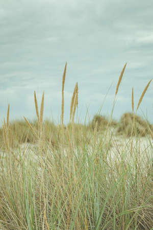 Vertical background with sand dunes, beach and beach grass alog the North Sea coast of he Netherlands