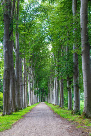 Portrait with teh entrance tot an old estate with old high linden trees. Stockfoto