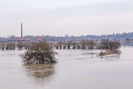 Flooded trees in floodplains along river Rhine near Wageingen and Renkum in Gelderland in the Netherlands. Foto de archivo