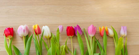 Flat lay with different colorfull Dutch tulips Imagens