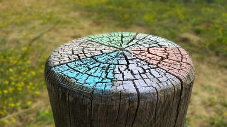 annual ring annual ring: tree stump colorful painted outdoor decorative