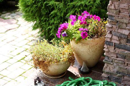 ollas de barro: Jard�n - Flores en crisoles de arcilla en un porche Foto de archivo