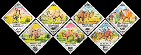Mongolia - circa 1978: A postage stamps printed in the Mongolian shows image Bactrian Camels series, circa 1978. Editorial