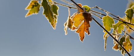 yellows: AUTUMN FROST ON THE LEAVES Stock Photo