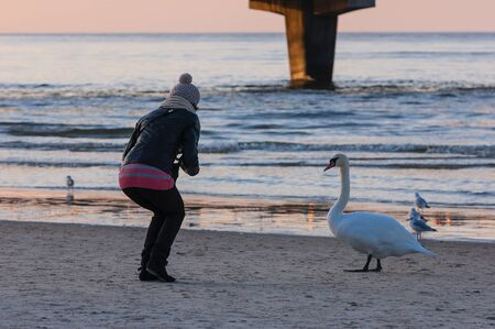met: GIRL AND SWAN AT SEA BEACH Stock Photo