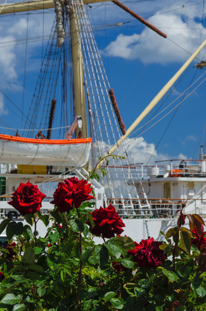 whithe: ROSES, WHITHE FRIGATE AND CUMULUS CLOUDS