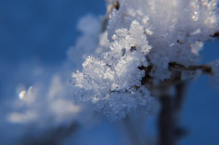 HOARFROST - Winter landscape of wild nature