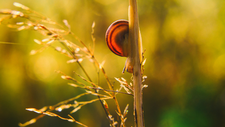 SNAIL - Wildlife in the morning