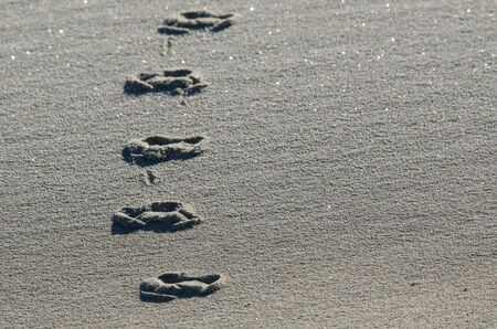 Traces of animals on the sand
