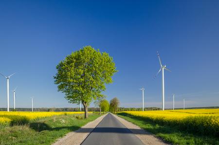 COUNTRY ROAD - Frühjahrsrapsfelder und ein Windpark