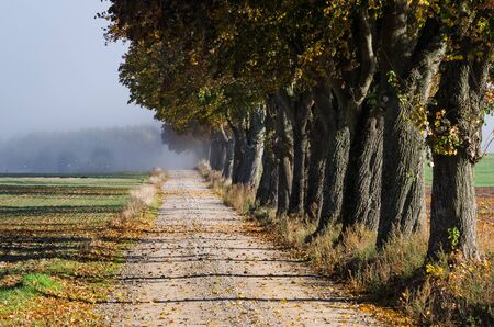 COLORFUL AUTUMN - Foggy, sunny and beautiful morning on a country road among fields Reklamní fotografie