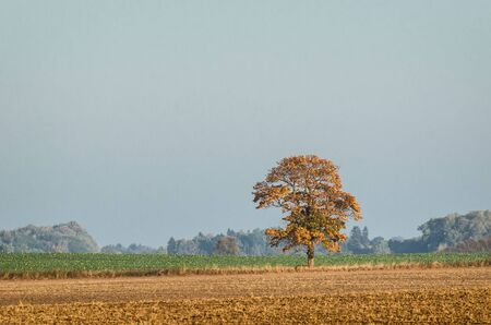LONELY AUTUMN TREE - Sunny and beautiful morning on a country among fields