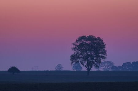 AUTUMN MORNING - A purple calm dawn over a tree and fields