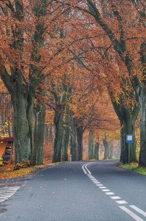 BUS STOP - Picturesque asphalt road between autumn beeches