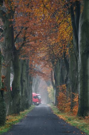 A TRUCK BETWEEN TREES - Picturesque autumn beeches over the asphalt road and a red vehicle