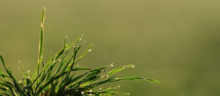 AUTUMN FIELDS AND MEADOWS - Morning dew drops on the grass Reklamní fotografie
