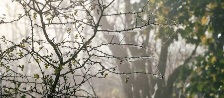 THE TIME OF AUTUMN WEATHER - Foggy and wet morning in the forest clearing