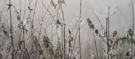 PEARL DROPS ON A COBWEB - Foggy and wet morning in the forest clearing