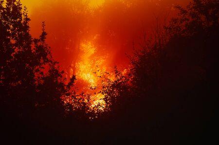 FOGGY MORN - Fiery autumn sunrise hidden behind trees Stock fotó - 130738548