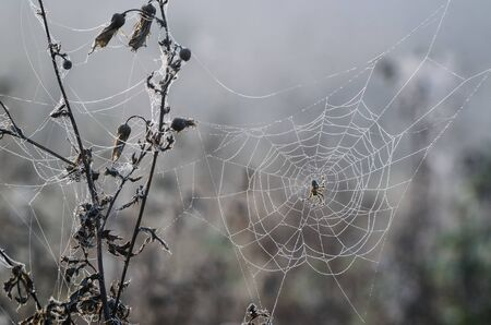 SPIDER ON A PEARLY COBWEB - Foggy and wet morning in the forest clearing Stock fotó - 130738550