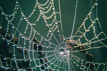 PEARL DROPS ON A COBWEB - Maybe some rain, maybe morning moisture Stock Photo