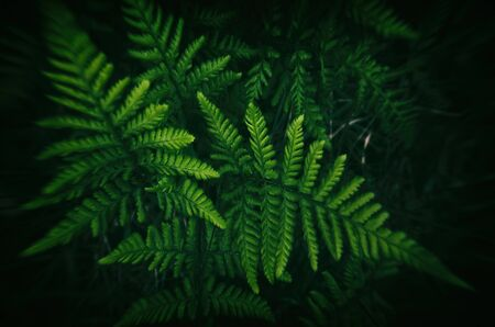 FERN - Spring green in the forest floor Stock fotó