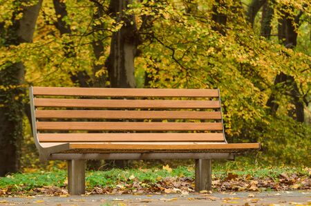 BENCH IN THE PARK - Colorful autumn in the city