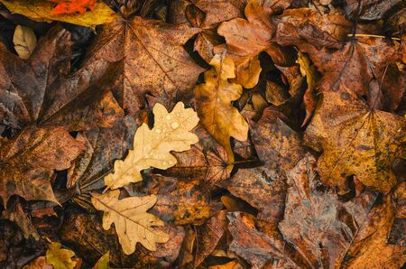 AUTUMN LEAVES - Fallen leaves on the ground in a park