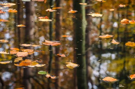 AUTUMN LANDSCAPE - Yellowed leaves from trees float on water