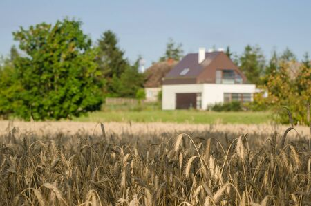 AGRICULTURE - Grain in the field in front of farmers house Stok Fotoğraf