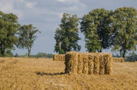 AGRICULTURE Stok Fotoğraf