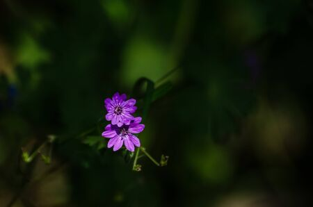 FIELD FLOWERS - A colorful plant in the sunshine in a forest glade