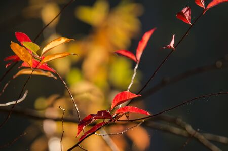 AUTUMN COLORS - Tree leaves illuminated by the suns rays
