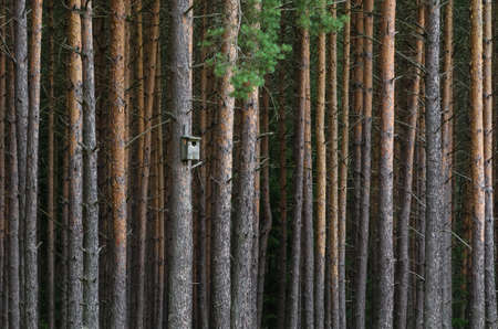 BIRDHOUSE - Bird nesting box on a tree in a pine forest 版權商用圖片