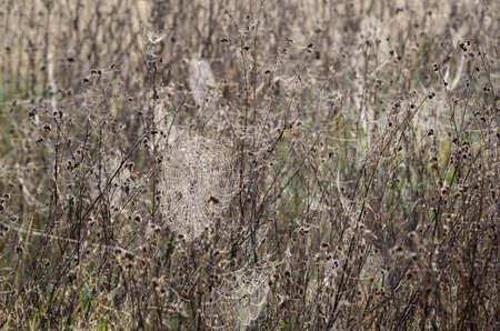 SPIDER WEB - Wild life in the autumn wetlands